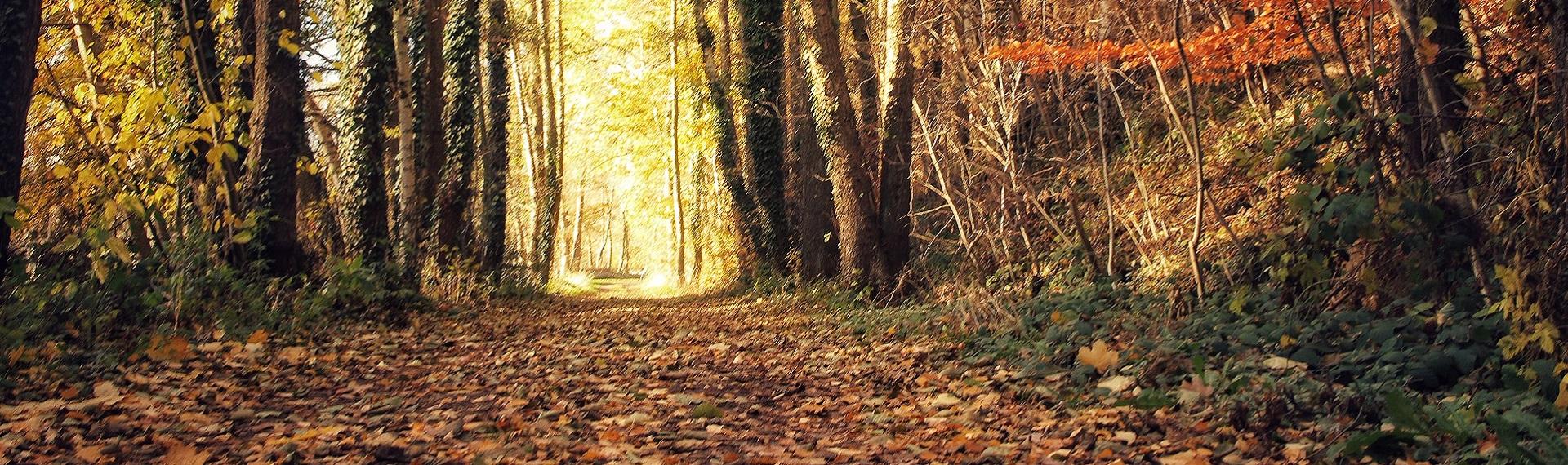 Herbst Wald_Laub