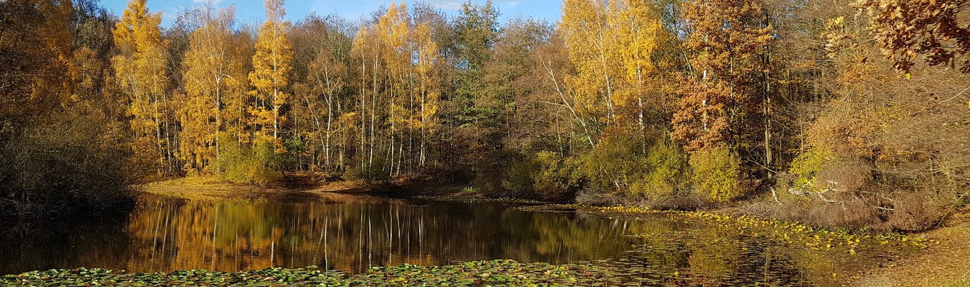 Herbst Seerosenteich
