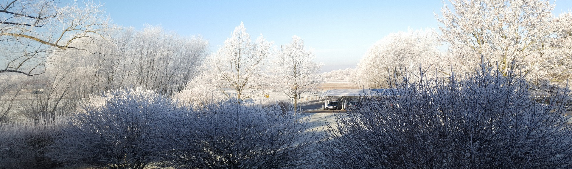 Winter - Rathaus Frost